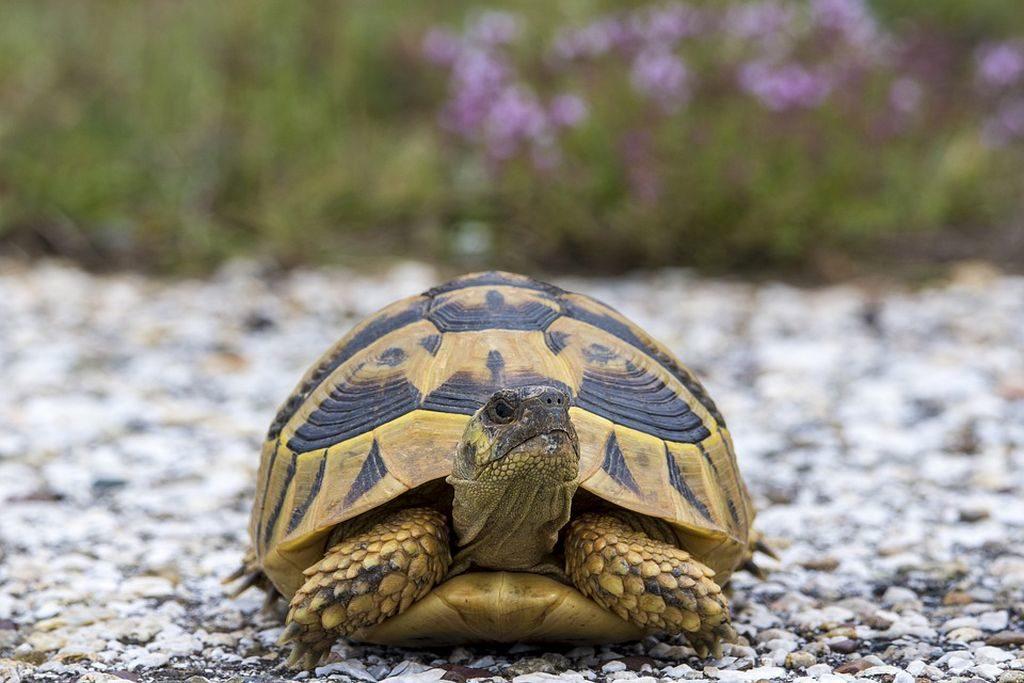 tartarughe di terra prezzo