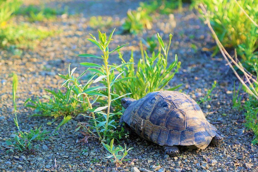 immagini di tartarughe