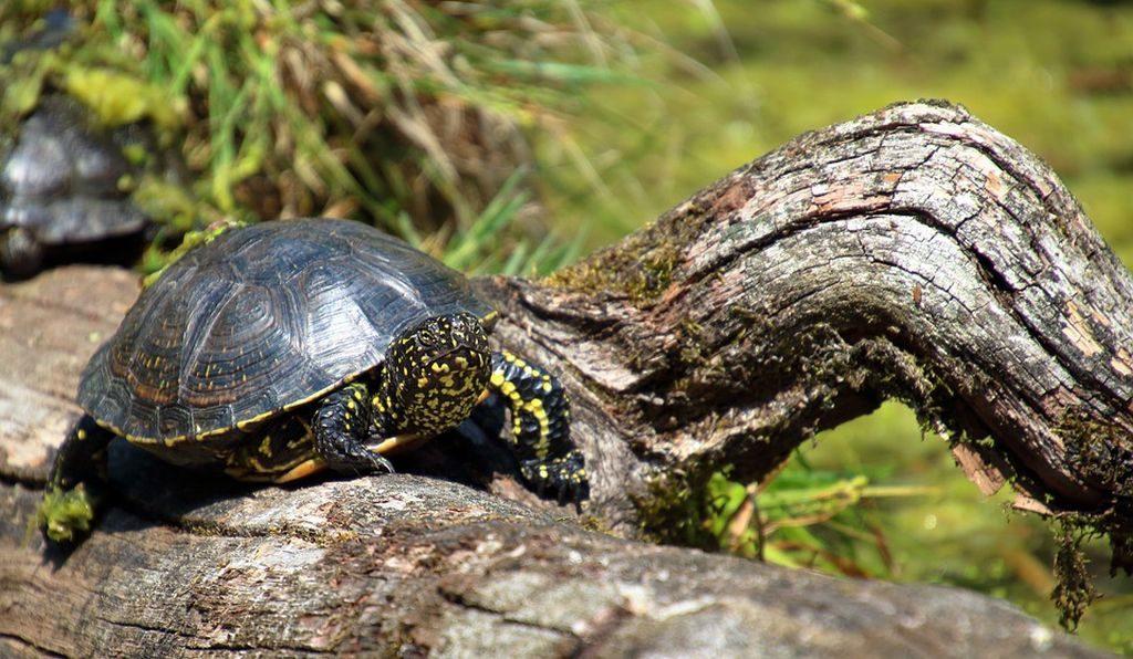 tartarughe terra