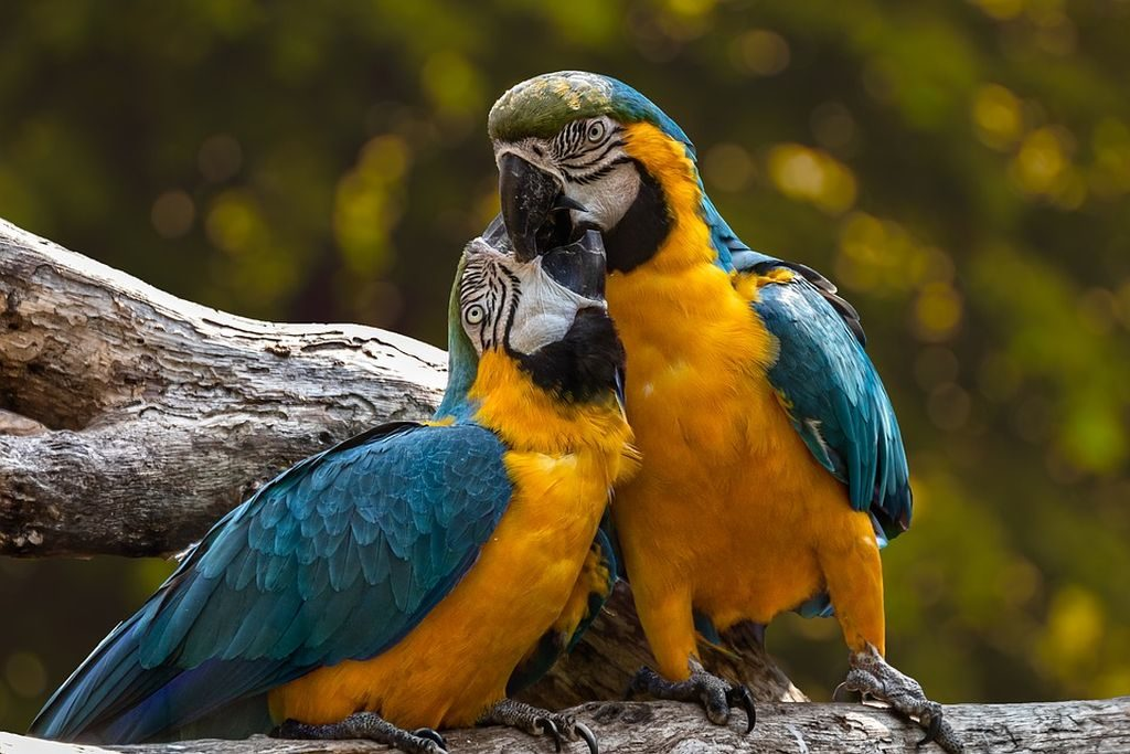 adottare un pappagallo