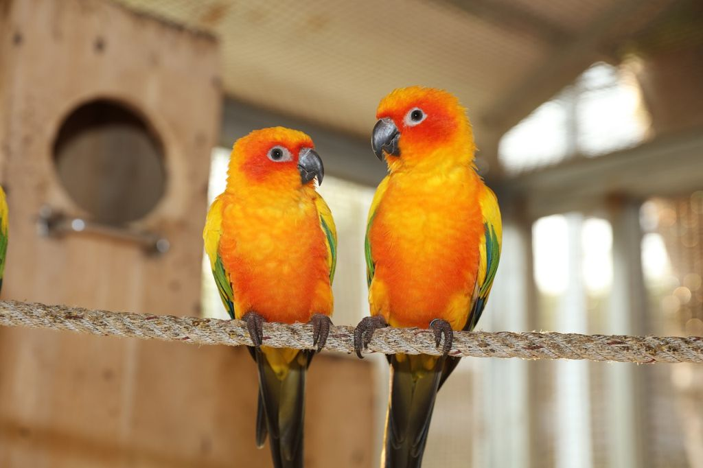 uccellini in casa