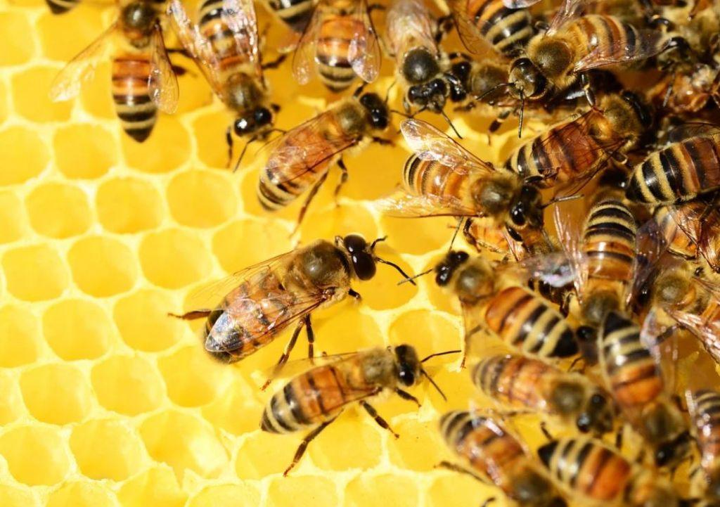 tute apicoltore